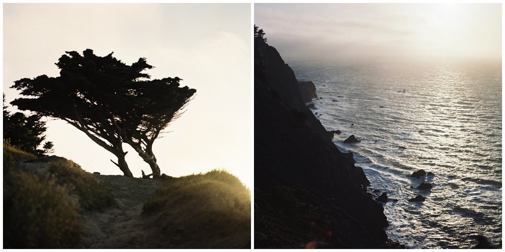 cliff and tree.jpg