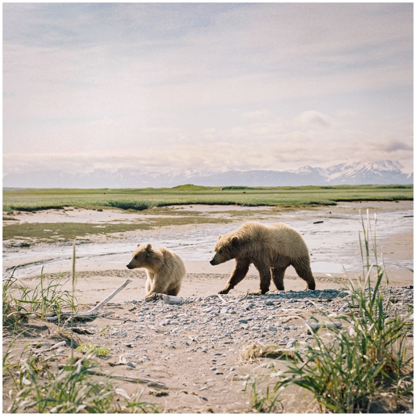 bear sqaure.jpg